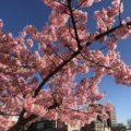 春分の日画像