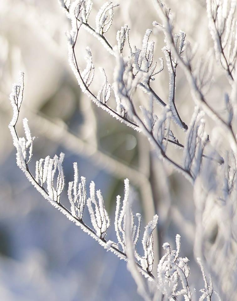 雪対策画像