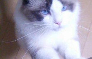 猫の日画像