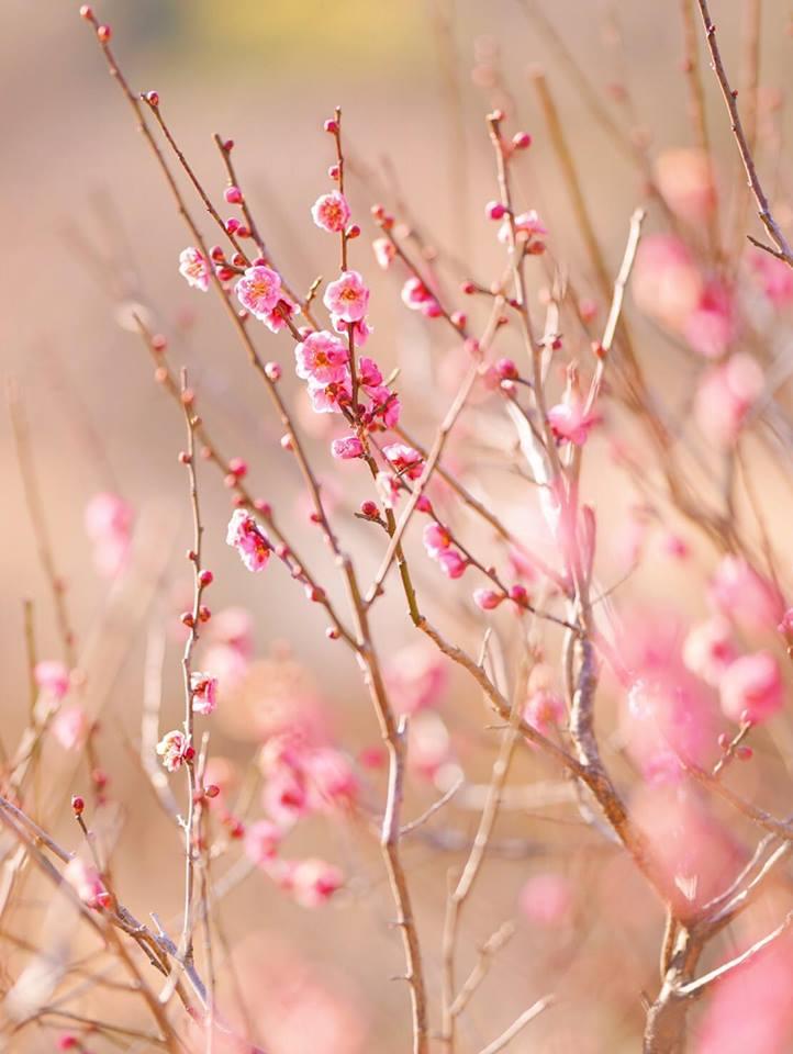 春一番画像