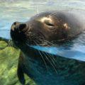 水族館1画像