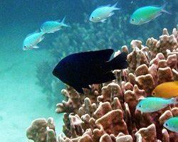 サンゴの日画像