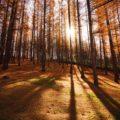 栗の季節がやってきた画像