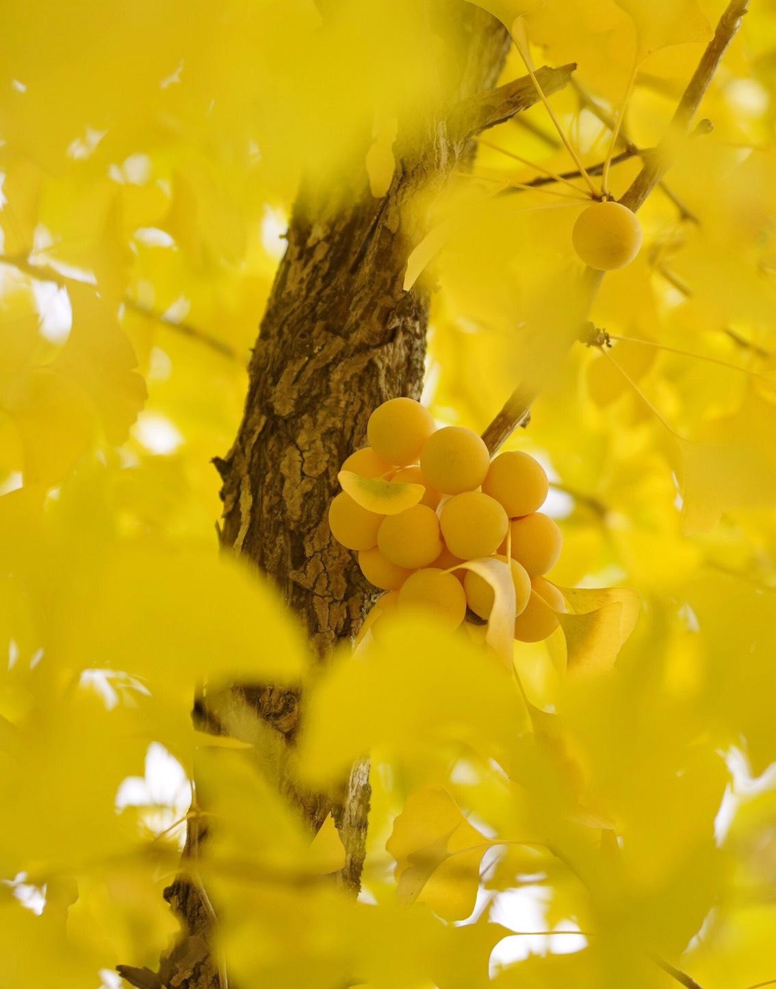 秋分の日画像