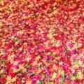 紅葉の季節のはじまり画像