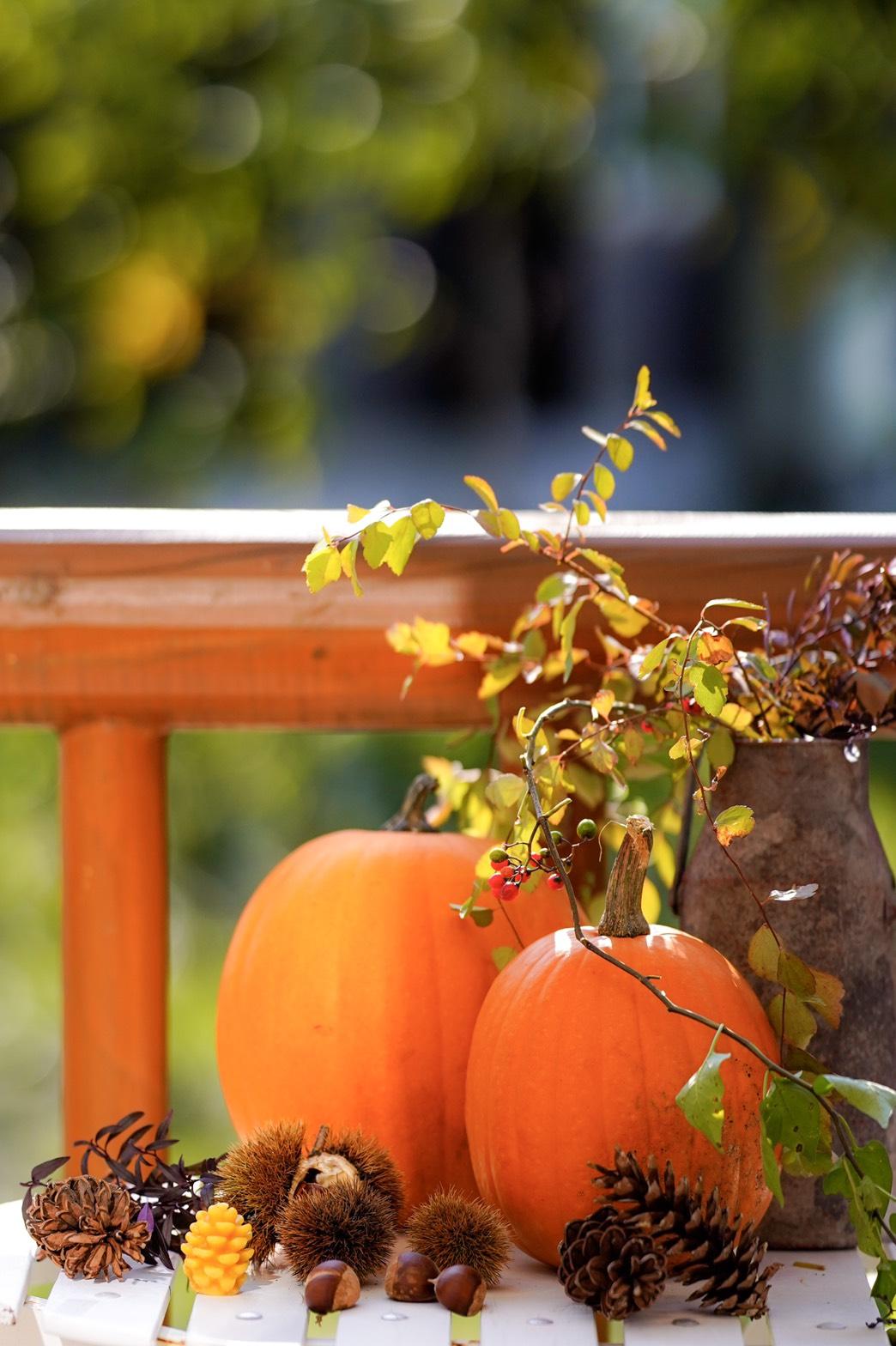 秋のかぼちゃ画像