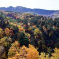 秋の七草画像