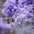 秋の花粉画像