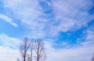冬の椿画像
