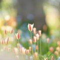春分の日とは?画像