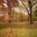 秋の味覚さつまいも画像