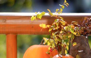 かぼちゃは栄養満点画像