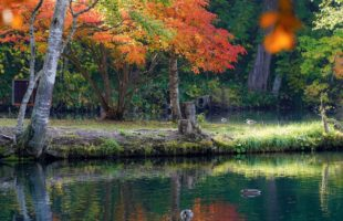 秋も深まる文化祭画像