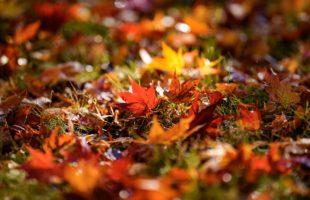松茸の季節画像