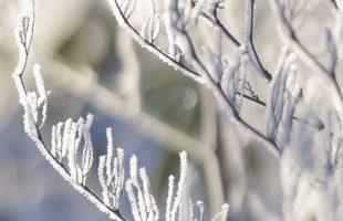 冬の食べ物が美味しい理由画像