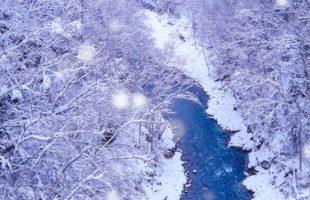 ロウバイの花は雪中四友画像
