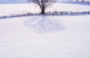 寒ブリはお刺身で・・・。画像