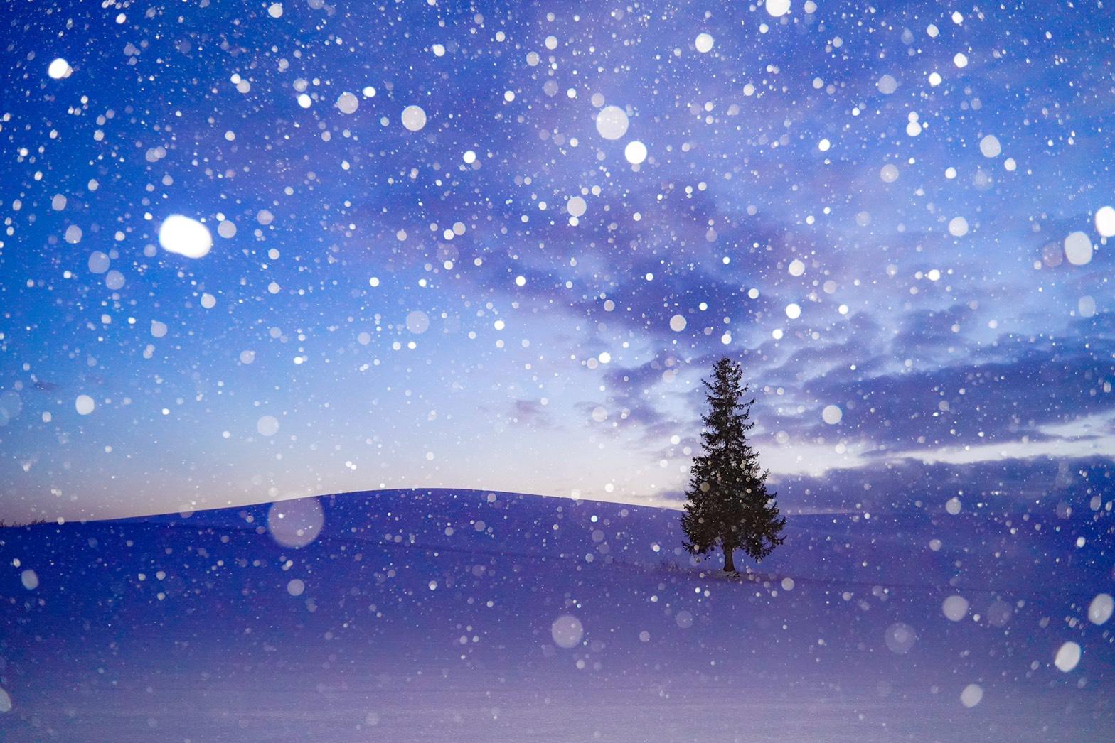 クリスマス当日!画像