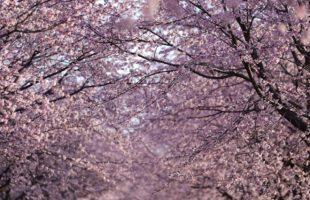 春のお彼岸にはぼたもちを…画像
