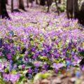 春はお花の季節!どんなお花がお好き?画像