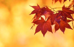 自然の中のASMR「秋の虫の音」画像